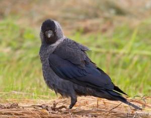 Птицы о птичках магазин птицы мира